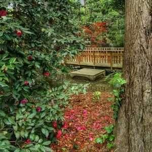 Hatcher Garden's Spring Plant Sale @ Hatcher Garden